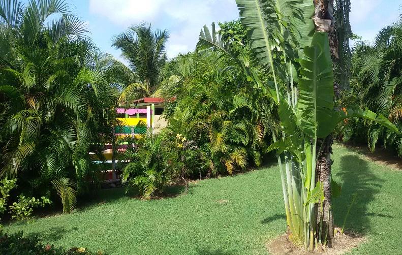 Jardin tropicale